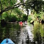 A Paddle Trip Up Turkey Creek