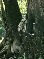 The Wildlife of the Hillsboro River