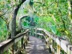 Day Hike through Turkey Creek Wildlife Sanctuary